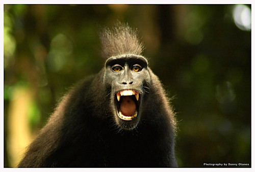 Zoobic_subic_monkey_13881_o